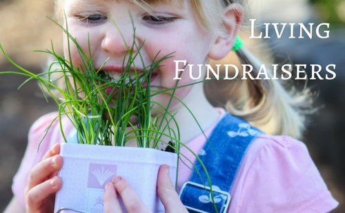 Living Fundraiser let you raise money selling gorgeous seed kits